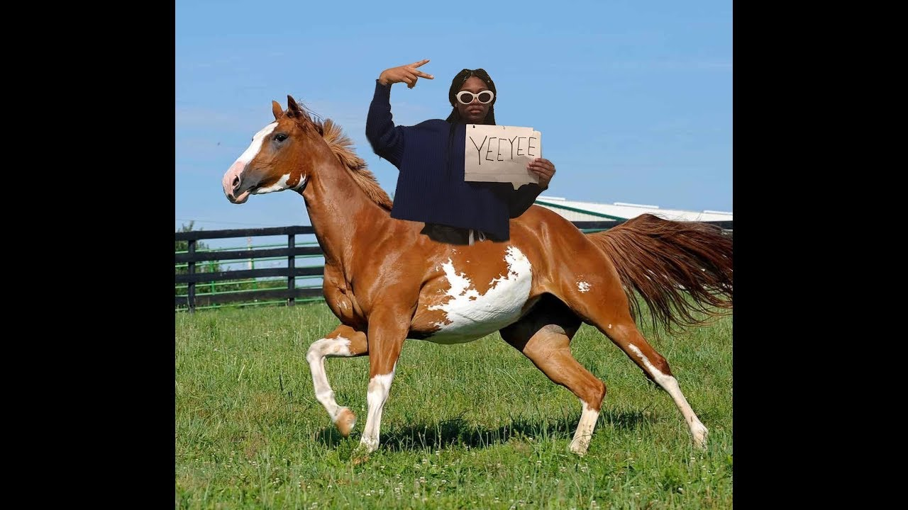 Horses in the back